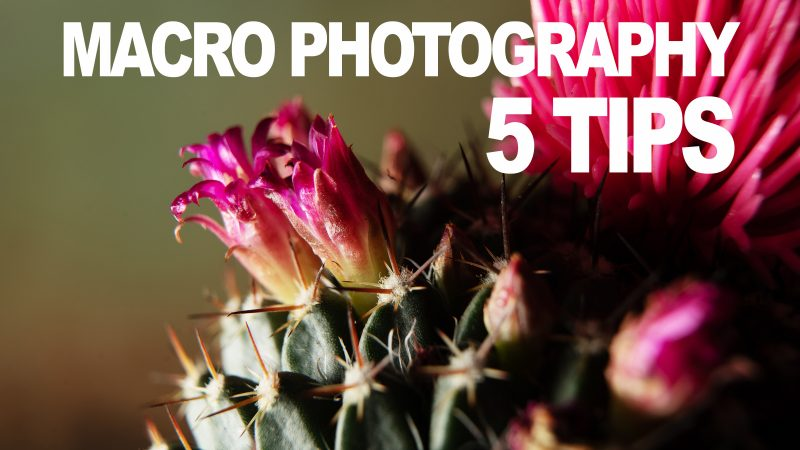 macro-photography-5-tips-yt-thumb